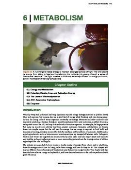 Biology - 6 - Metabolism