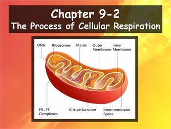 Biology - 9.2 The Process of Cellular Respiration Powerpoi