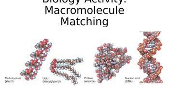 Biology Activity: Macromolecule Matching
