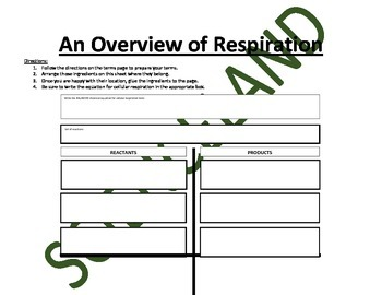 Biology Activity: Overview of Cellular Respiration