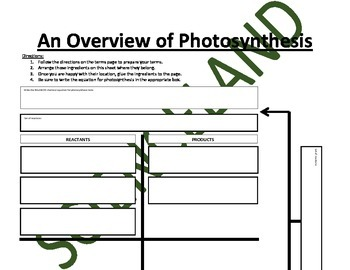 Biology Activity: Overview of Photosynthesis