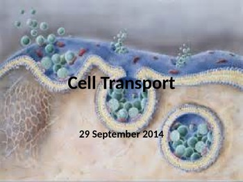 Biology - Cell Transport