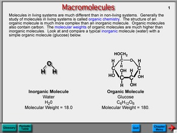 Biology Chapter 6: Macromolecules