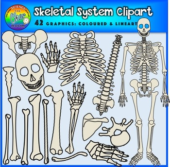 Human Skeleton and Skeletal Body Parts Clipart