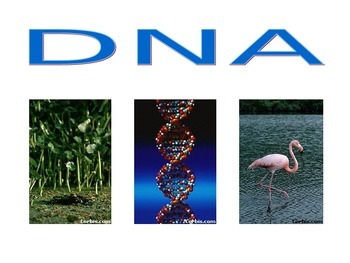 Biology: DNA (Visually Adapted for ELL/ESL)