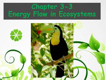 Biology - (3.3 Energy Flow in Ecosystems Powerpoint and Gu
