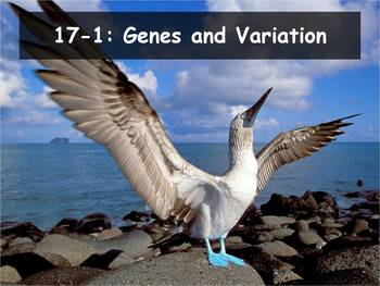 Biology - (17.1 Genes and Variation Powerpoint and Guided Notes)