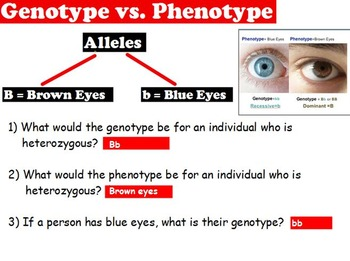 Genetics - Genotype/Phenotype; Heterozygous/Homozygous w/