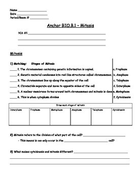 Genetics - Mitosis Worksheet