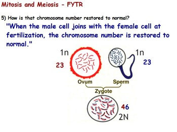 Genetics - Mitosis and Meiosis; Reading Assignment w/ worksheet