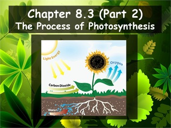 Biology - Photosynthesis 8.3 Process of Photosynthesis Pt