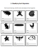 Biology Worksheets - Classifying, Plants, Fungi, Metamorphosis