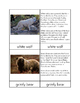Biomes - Tundra Animals Three/Four Part Cards