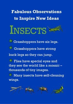 Biomimicry Fabulous Observations - Insects