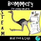 STEM - Biomimicry for Young Children - Birds' Feet and Legs