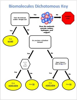 Biomolecules Dichotomous Key - Classifying Organic Molecules