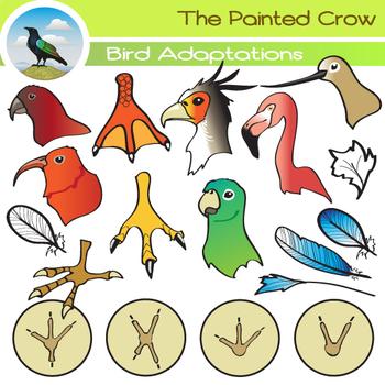 Bird Clip Art ( Adaptations ) - Beaks, Feathers & Feet - 4