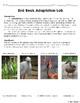 Bird Beak Adaptation Laboratory Experiment