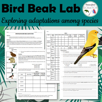 Bird Beak Adaptations Lab