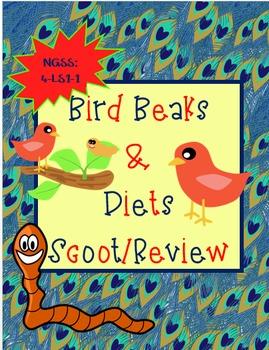 Bird Beak Shapes & Diet Scoot