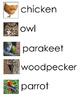 Bird Birds Word Wall