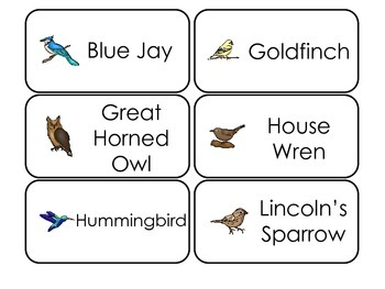 Bird Types Picture Word Flash Cards. Preschool flash cards