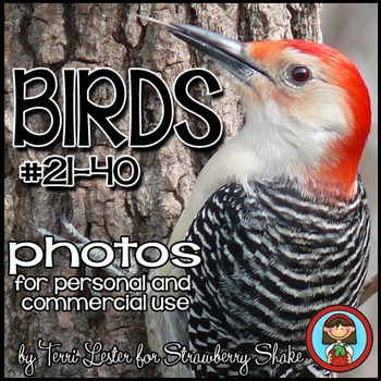 Photos Photographs Birds #2 Science and Nature for Persona