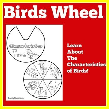 Birds Activity | Birds Craft | Birds Unit | Bird Craft | B