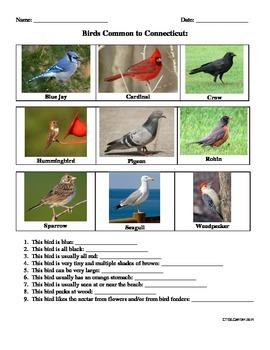 Birds Common to Conecticut