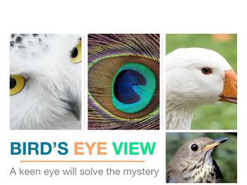 Bird's Eye View Mystery Puzzle Interdisciplinary Powerpoin