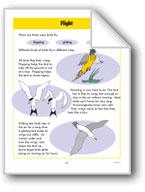 Birds - Flight