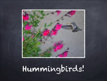 Birds Vol. 08: Hummingbirds - PowerPoint Slideshow Presentation