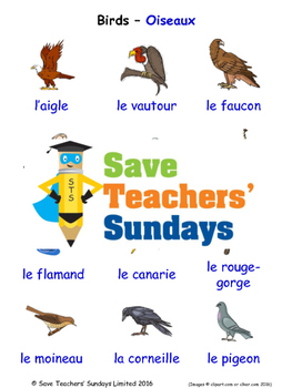 Birds in French Worksheets, Games, Activities and Flash Cards