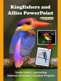 FREE! Birds PowerPoint & Activity Guide: The Kingfishers & Allies