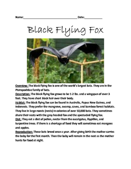 Black Flying Fox - Review Article Lesson Facts Information