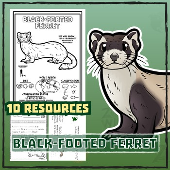 Black-Footed Ferret -- 10 Resources -- Coloring Pages, Rea