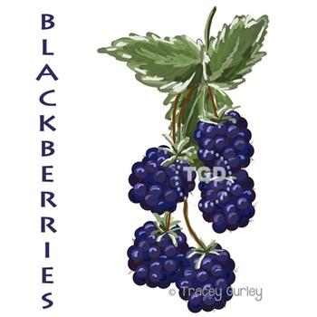 Blackberries Painting Printable Tracey Gurley Designs