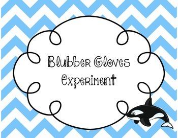Blubber Gloves Experiment