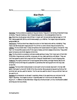 Blue Shark - Review Article - Facts Info Questions Vocabul