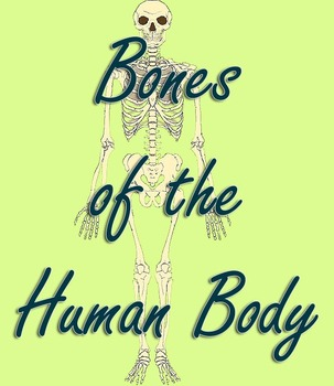MontessoriLove Bones of the Human Body