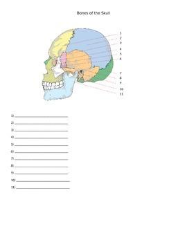 Bones of the Skull Quiz