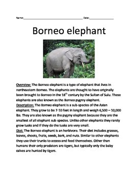 Borneo Elephant - review article information facts questio