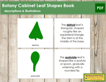 Botany Cabinet Leaf Shapes: Book