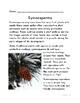Botany: Gymnosperms