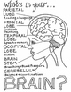 Brain Anatomy Color Sheet
