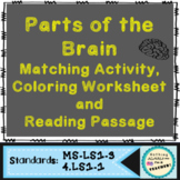 Brain Parts and Functions Printable Matching Activity