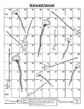 Brains & Neurons Board Game (K - 3rd grade)