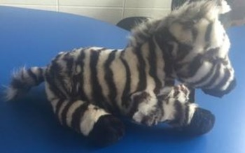 Brand new zebra stuffed animal-perfect for a reading buddy