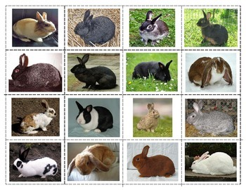 Breeds of Rabbits:  Mini Match-up Cards