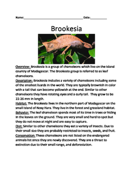 Brookesia - Lizard informational article lesson facts ques